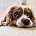Zo voorkom je dat je hond te veel last krijgt van de hitte